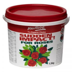Sudden Impact for Roses